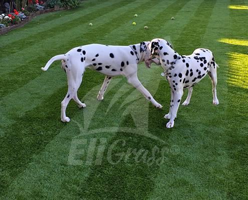 EliGrass Pet Solutions 01