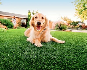 EliGrass Pet Solutions 03